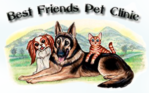 best-friends-pet-clinic